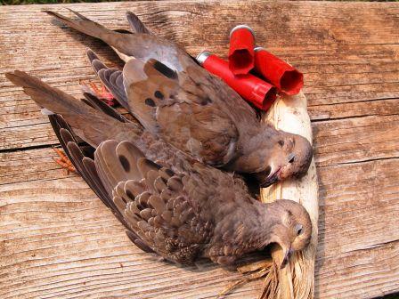 Dove_pair