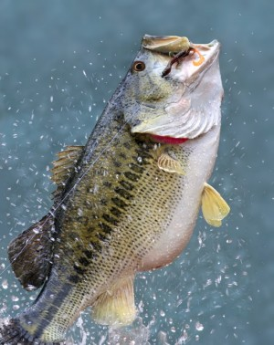 bass-fishing-ga