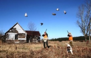 quail-hunting-ga